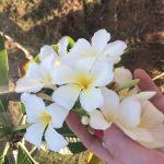Be-Travelled, Flower, white, paradise