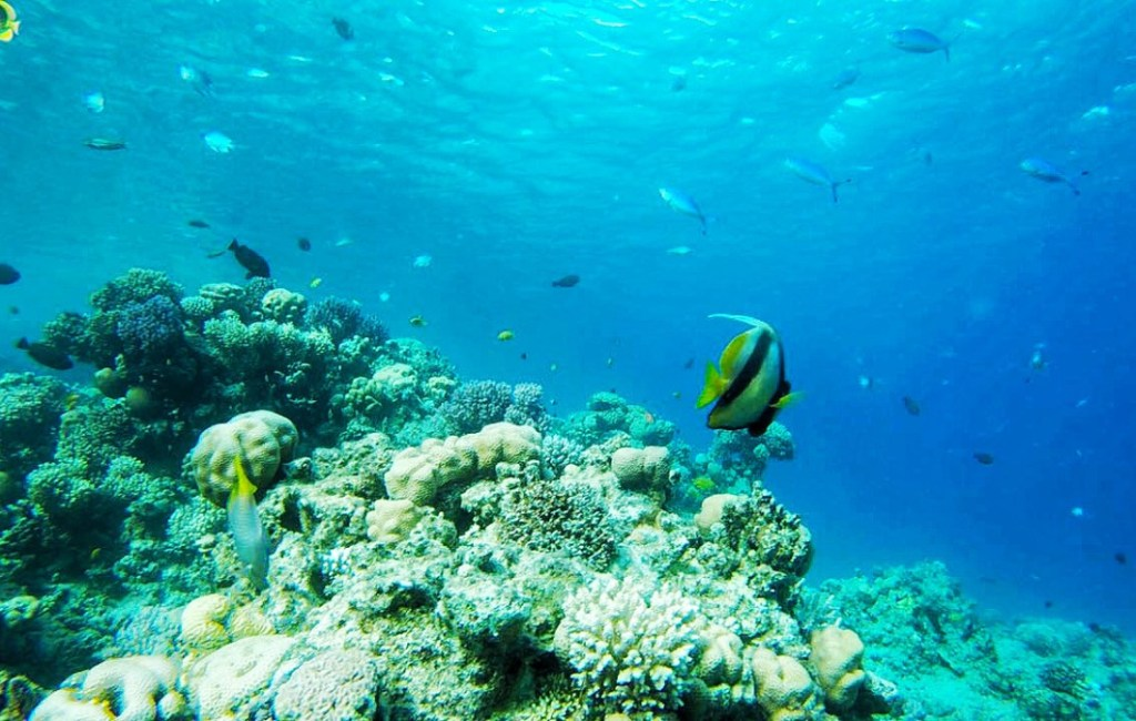 Diving the first time (Sharm el Sheikh)