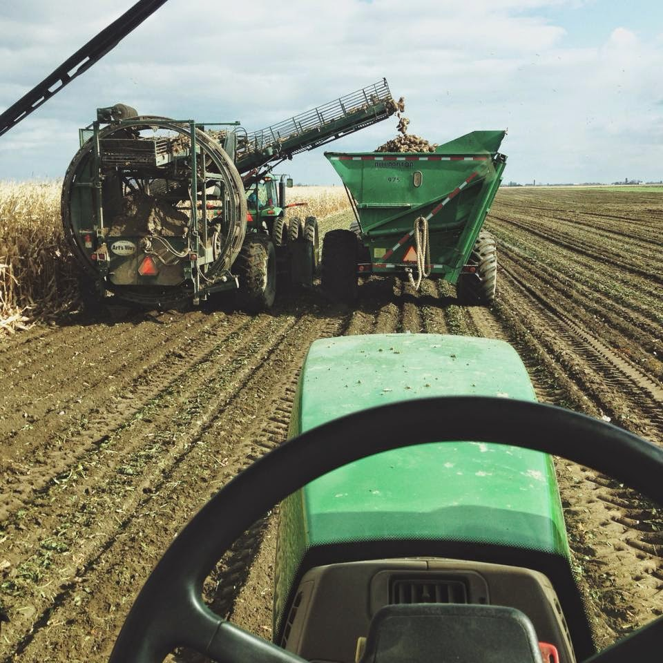 Harvesting Sugar Beets by Steve Roggenbuck
