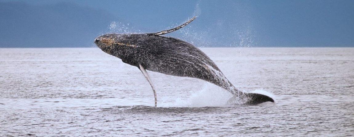 whale watching samana, las terrenas real estate, dominican republic, property sales