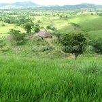 Dominican Republic Cattle Farm For Sale