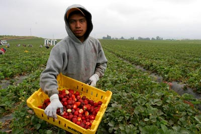 Image result for california mexican crop workers