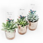 Diy Succulent Place Card Holders Beacon Lane Blog