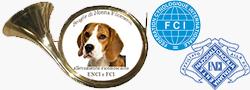 Allevamento Beagle di nonna Filomena – Cuccioli Beagle Selezionati – Abruzzo – Centro Italia – Beagle da esposizione, Beagle da lavoro, Addestramento Beagle, Affisso ENCI / FCI
