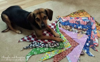 Luna shows off her bandana collection. She wants more more more!