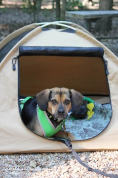 Luna enjoys her personal tent
