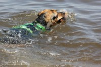 Luna goes swimming for the first time