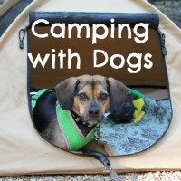 Camping with Dogs for Beginners