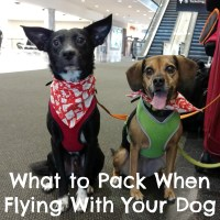 The Ultimate Packing List for Flying With Your Dog {For Beginners}