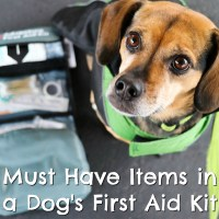 Must Have Items for Your Dog's First Aid Kit {Stocking Stuffer Giveaway – Day #5}