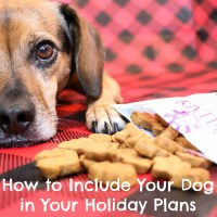How to Include Your Dog in Your Holiday Plans {Stocking Stuffer Giveaway – Day #1}