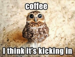 Owl Coffee Meme