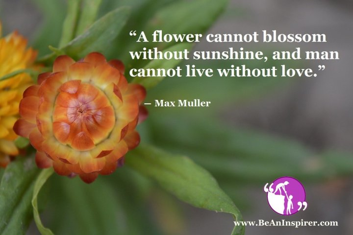 A-flower-cannot-blossom-without-sunshine-and-man-cannot-live-without-love-Max-Muller-Be-An-Inspirer
