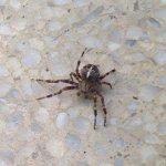 garden spider at Coleman Coffee Waterloo