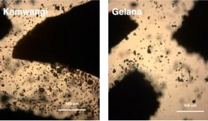 optical microscope image in water
