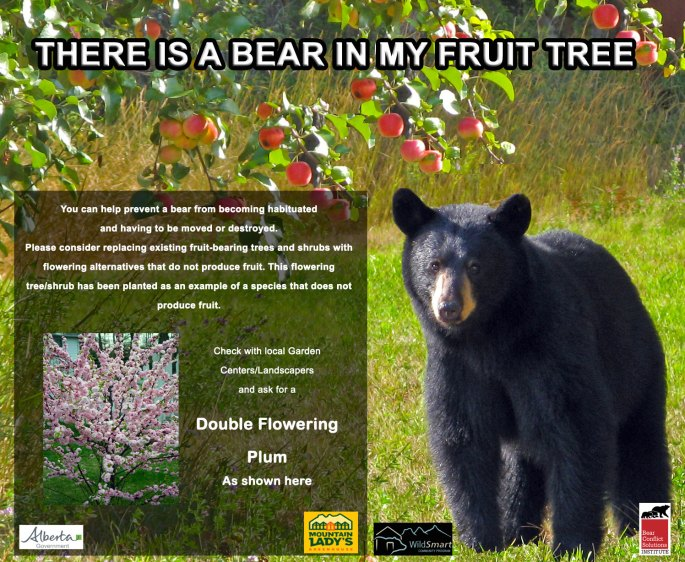 Bear in my fruit tree poster