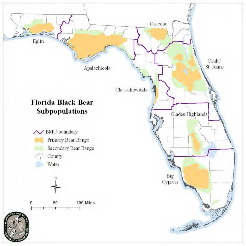 Florida Black Bear Bear Conservation