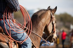 Rodeo rider on a horse