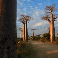 The Ultimate Guide to Madagascar