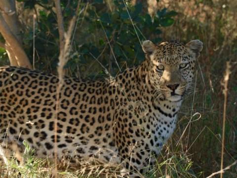 Okavango Delta and Moremi Game Reserve, Elephants, Makoro Experience, Zebra, Leopard, Buffalo, Flight, Botswana