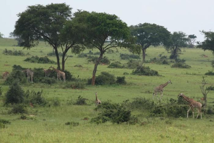 The Pearl of Africa, Uganda, Sipi Falls, Mount Elgon, Queen Elizabeth National Park, Fort Portal, Murchison Falls National Park, Red Chili, Enjojo, Bwindi Backpackers, Mountain Gorilla Trek, Kigali, Kampala