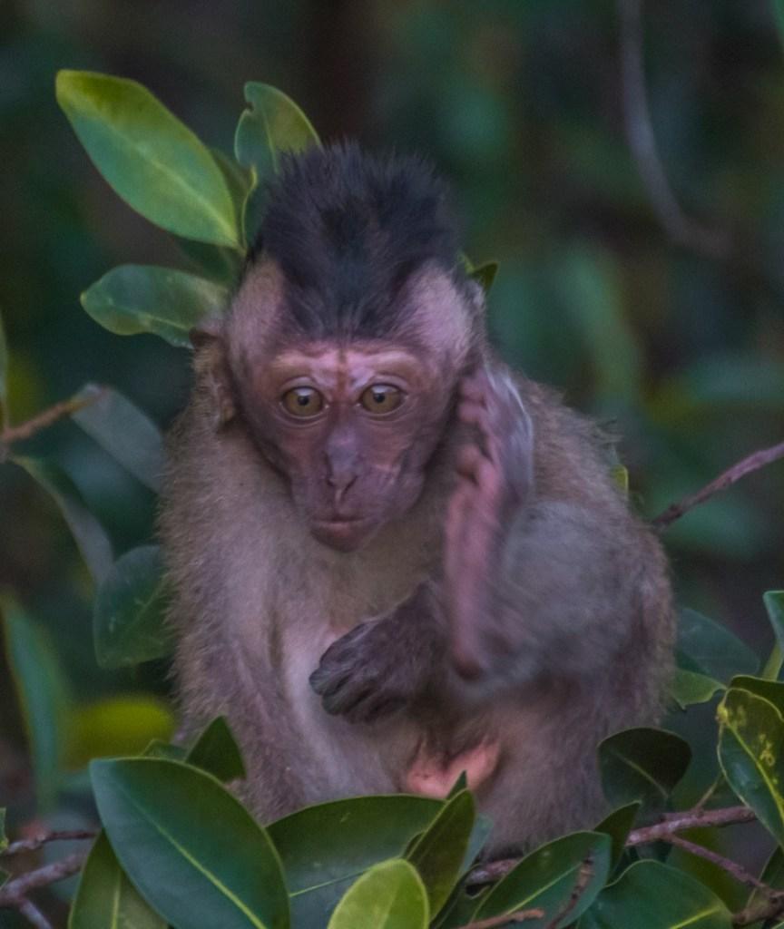 Wildlife Spotting on a Kinabatangan River Tour, Kinabatangan River Tour, Kinabatangan River Cruise, Borneo Tourism, Borneo Orangutan, Proboscis Monkey, Pygmy Elephants, Sukau Kinabatangan, Borneo Safari, check out more at www.beardandcurly.com