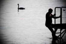 Undrar vad svanen tycker om sällskapet...