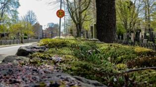 promenad-karlstad-0698