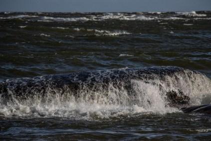 180810-175927-waves-1D8A7845