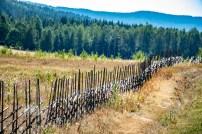 180802-092643-fence-1D8A5207