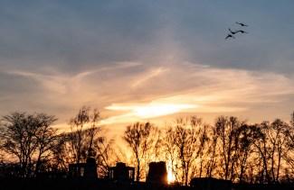 200407-184630-birds-sunset-1D8A2973
