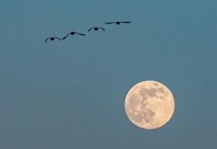 200407-184645-birds-moon-1D8A2977