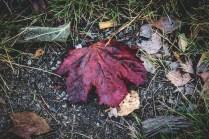 200920-115027-leaf-IMG_5452