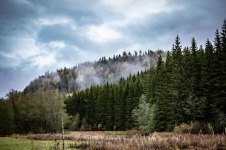 201010-115639-skog-smoke-1D8A3265