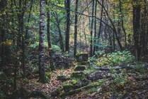 201010-122709-skog-1D8A3312