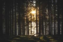 201018-171756-skog-sol-1D8A4007