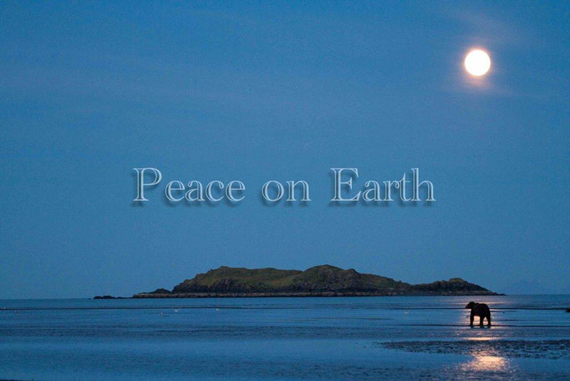 Peace On Earth UPDATE December 25 2012 The Wildlife