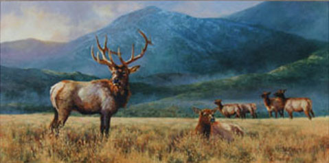 Plains Elk by Bonnie Marris