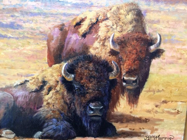 Yellowstone Bison by Bonnie Marris