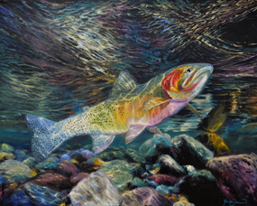 Westslope Cutthroat by James Corwin