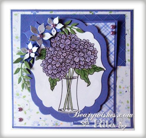 Rita_Hydrangea-Blooms