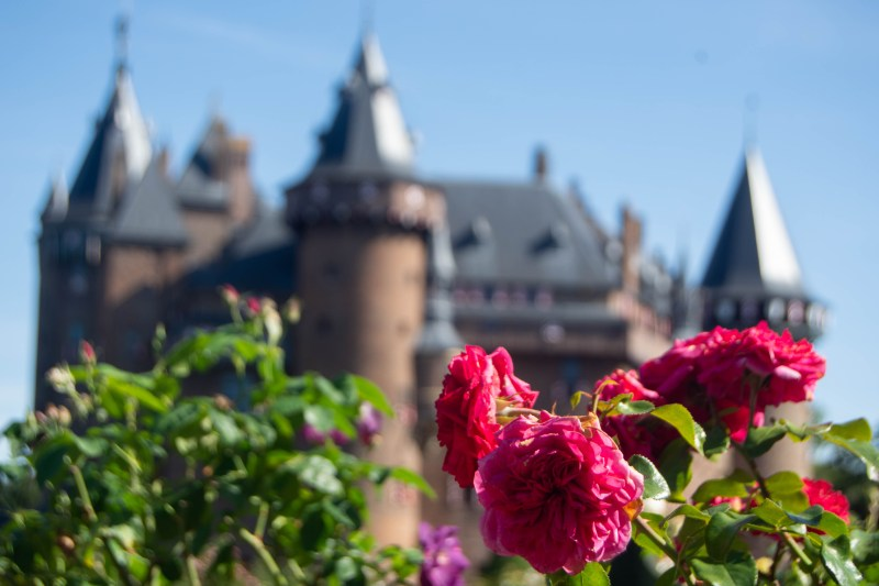 The castle's rose garden was still quite lovely even in September