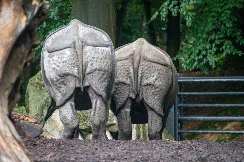 Rhinos' Behinds at DierenPark Amersfoort by Beatrice Murch