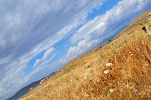 wild meadow and wide sky