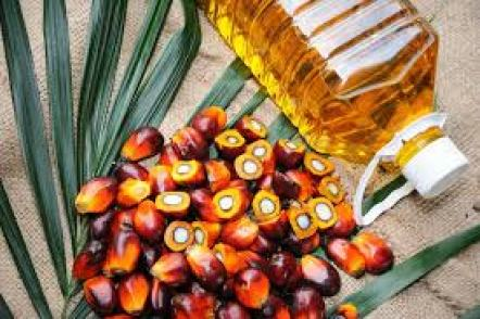 palm oil harvard