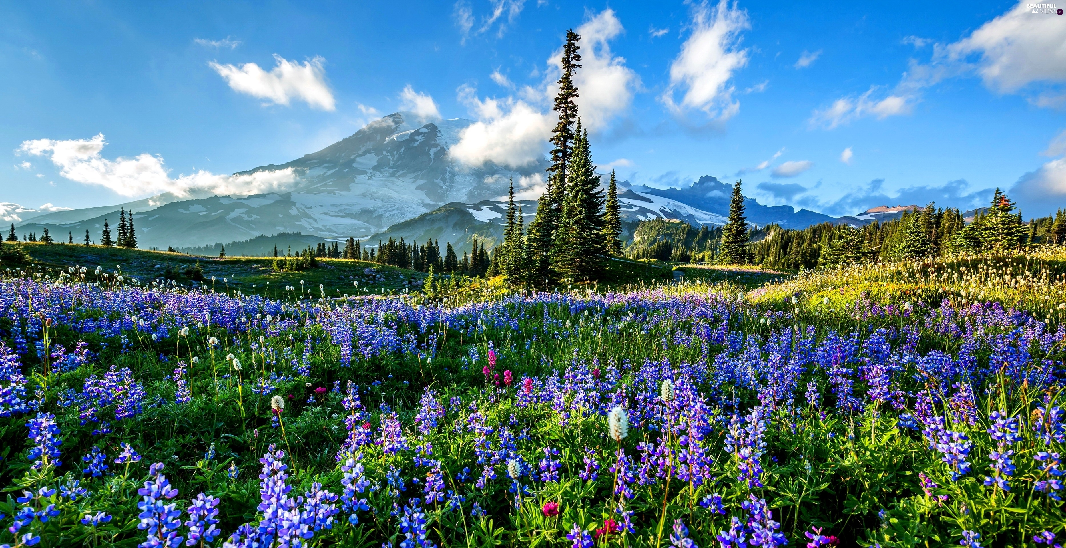 woods, Mountains, Meadow, Flowers