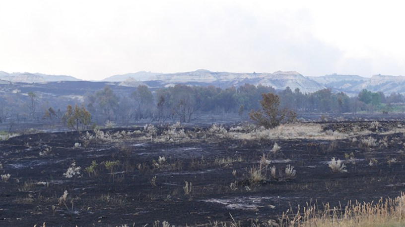 Charred and burned remains of vegetation on the floor of the valley