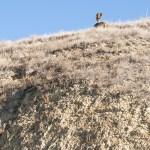 metal sculpture of clown on hill