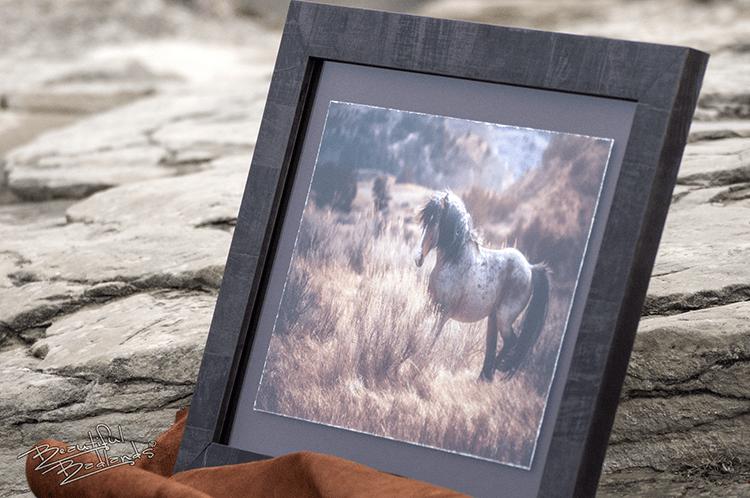 Blaze wild horse from Medora