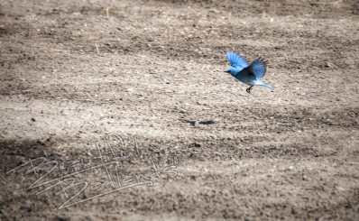 snapshot Saturday bluebird